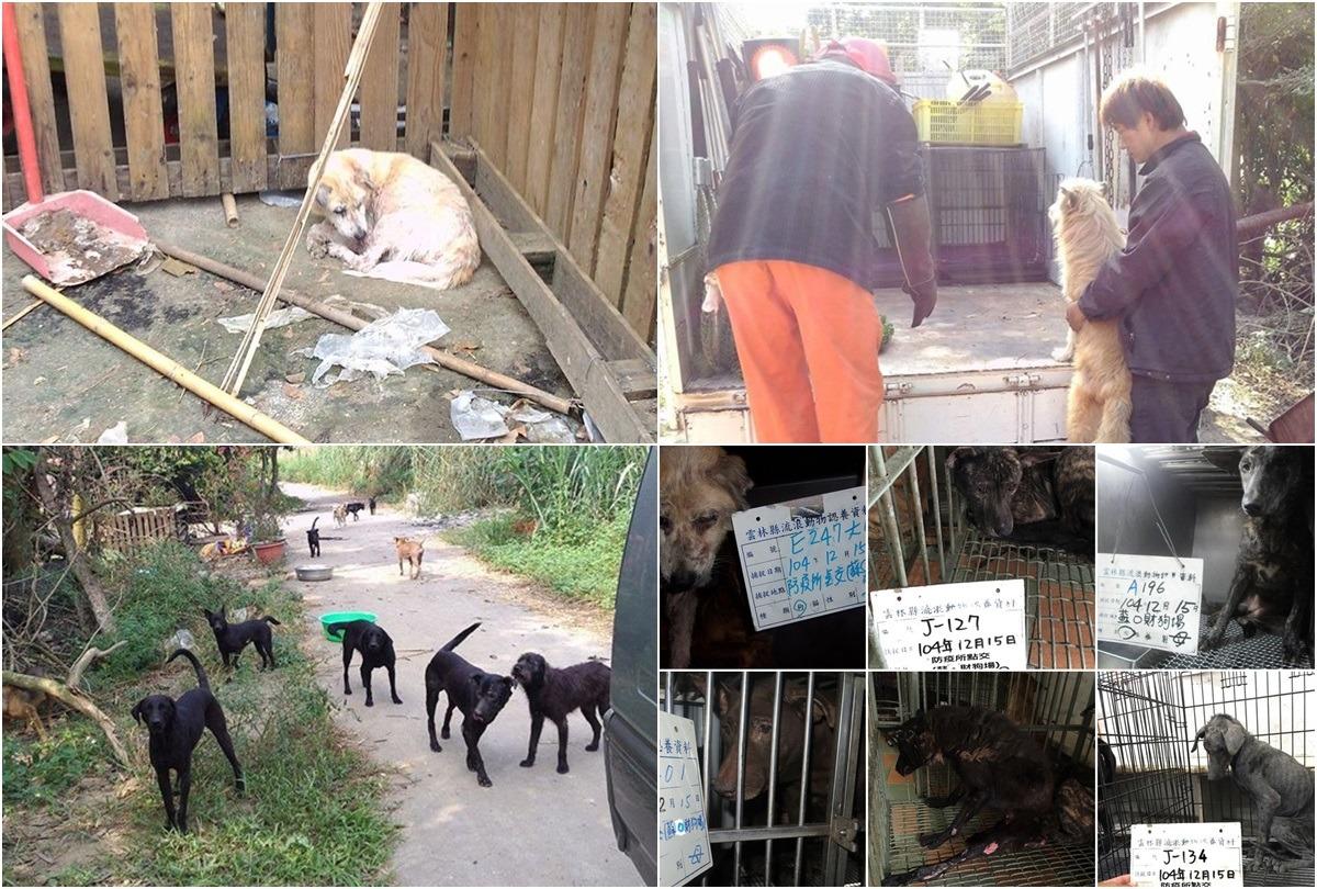 2015年底,雲林縣動植物防疫所強制沒入蘇進財狗園不當飼養的犬隻100隻。 台灣動物新聞網資料照(雲林縣動植物防疫所/提供)