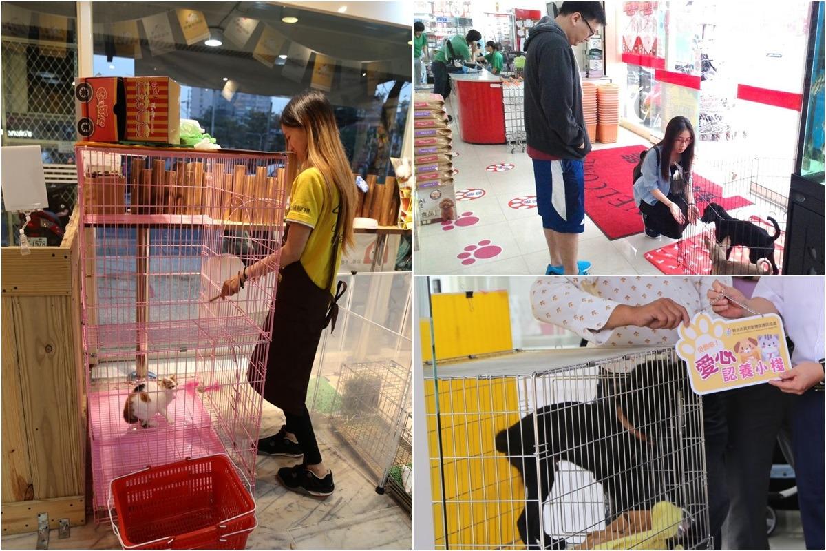 新北市自2015年開始招募「愛心認養小棧」,至今已有44間店家響應,同時可收容66隻動物,至2017年1月31日止,一共送養出1075隻動物,等於2.5個板橋動物之家的收容量。 台灣動物新聞網資料照(新北市動保處/提供)