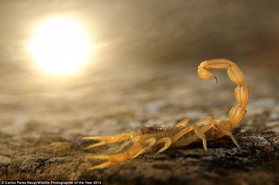 野生动物摄影赛得奖作品 让人惊叹