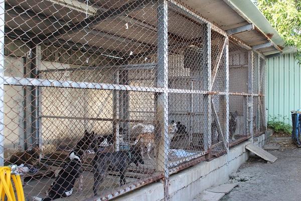 學生向學校爭取經費蓋狗舍,讓不能自由活動的狗狗住進來。 輔大關懷流浪動物志工團隊/提供