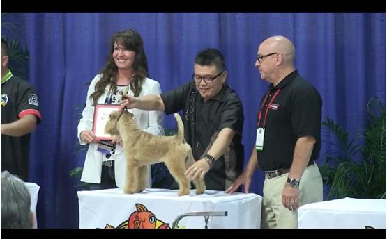圖為台灣莊捷學老師勇奪㹴類犬大賽第二名。