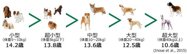 寿命 小型 犬