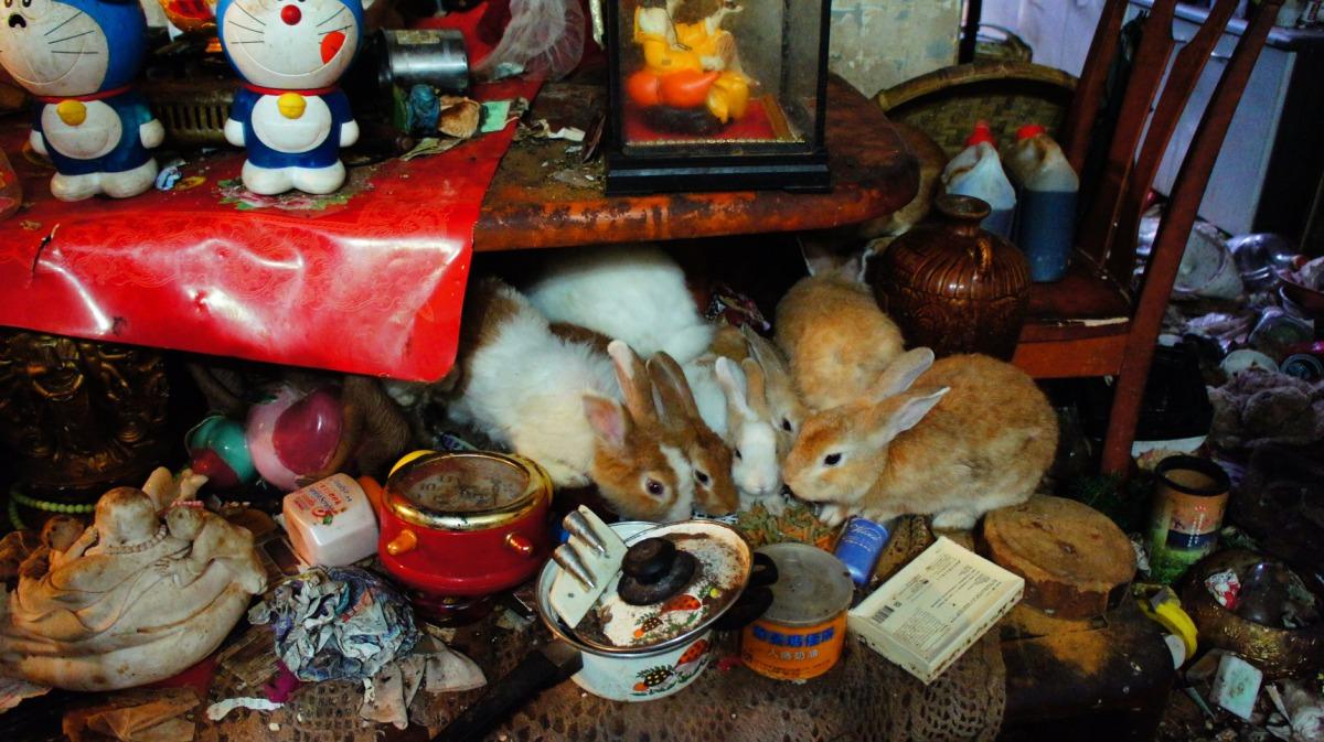 台中市有一名婦人在髒亂的空間中飼養了大量寵物兔,台灣愛兔協會將於28日、29日舉辦緊急送養會。台灣愛兔協會/提供