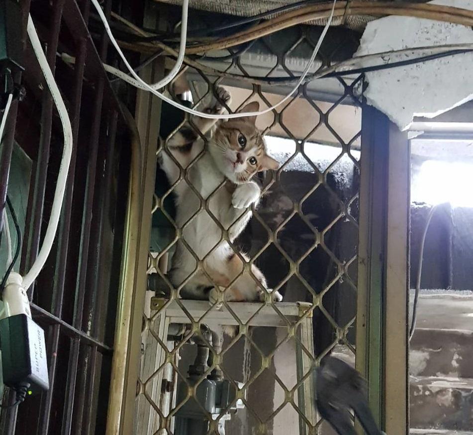私闖民宅的浪貓頭部卡在鐵窗縫隙中,動彈不得。台北市動保處/提供