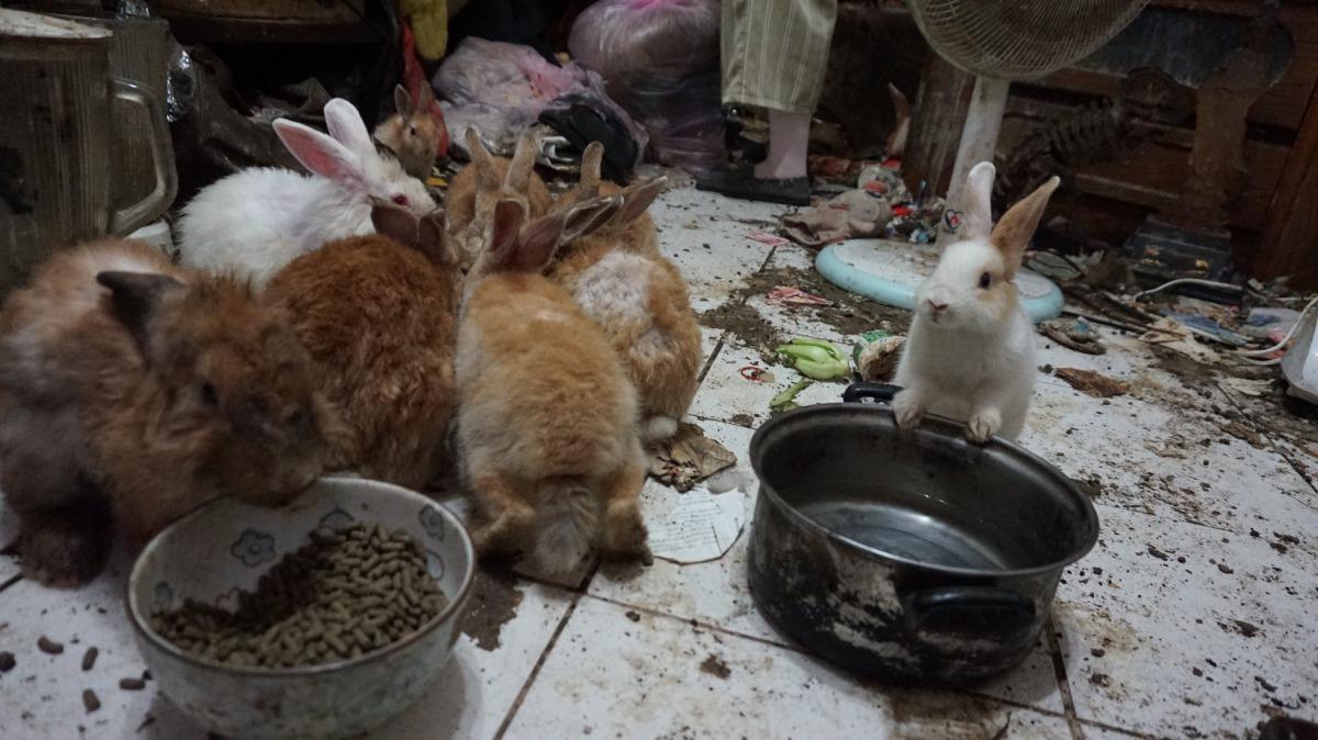 現場環境髒亂。台灣愛兔協會/提供
