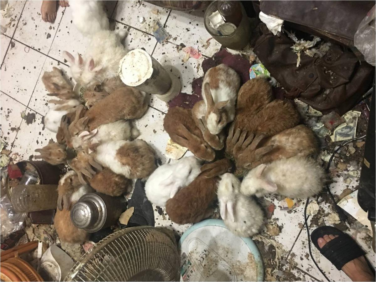 照片中可見現場環境髒亂。台灣愛兔協會/提供