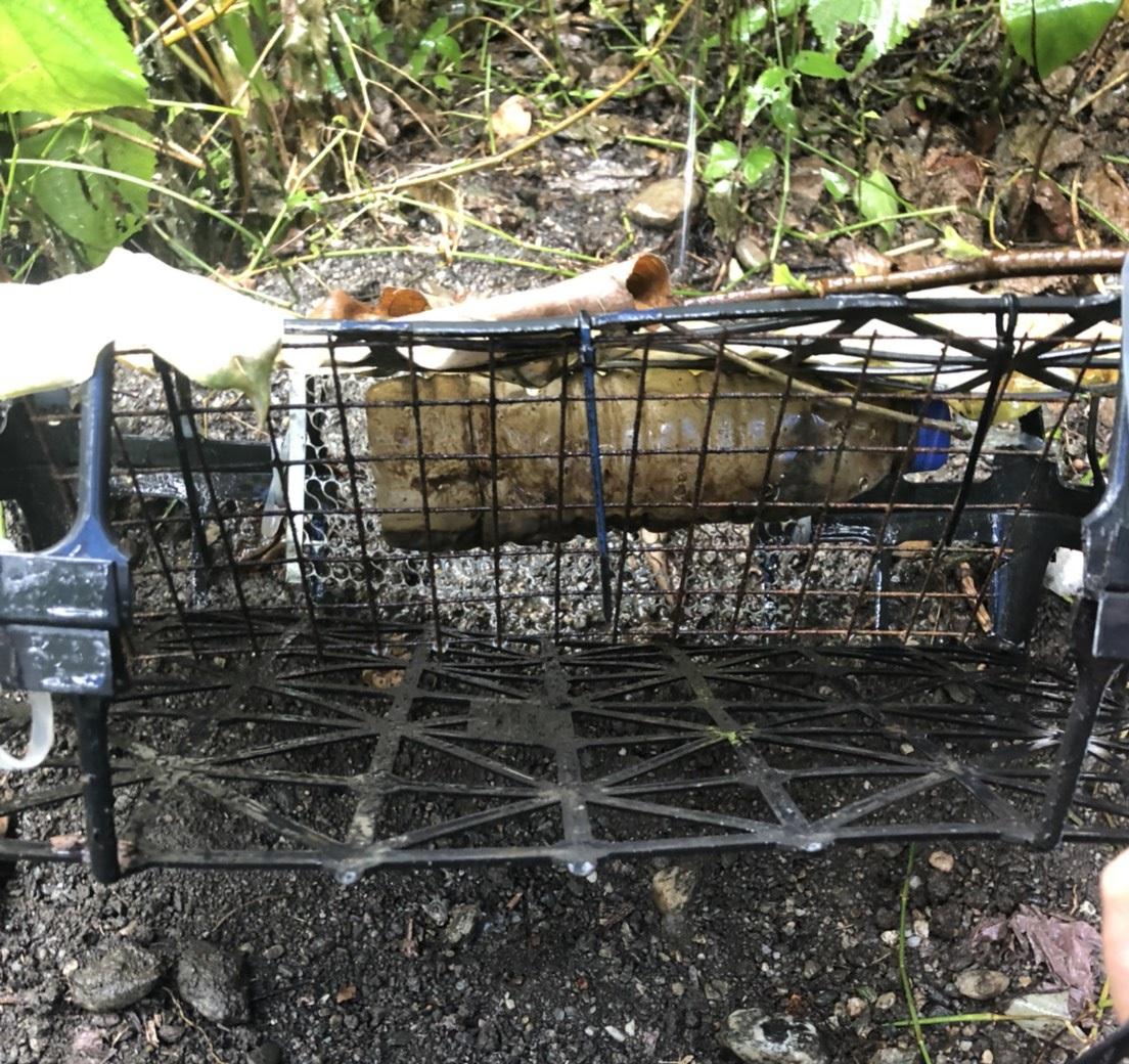 花蓮林管處在山區發現犯嫌自製的誘捕籠,在現場架設微型攝影機蒐證。花蓮林管處/提供