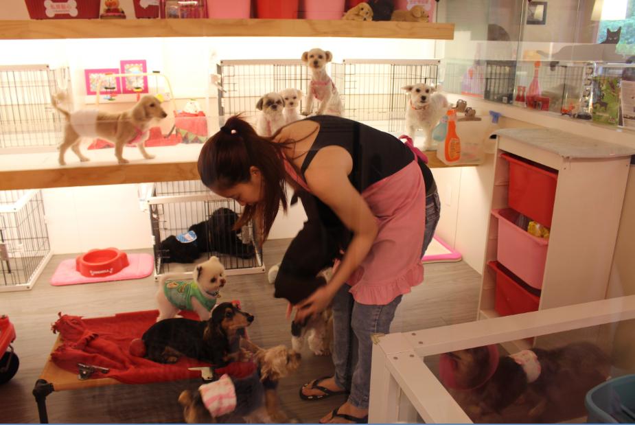 北歐寵物旅館的動物保母們時常會與毛孩子互動 李娉婷/攝
