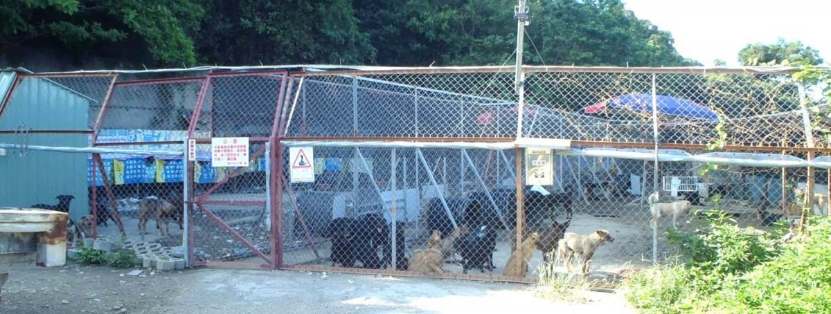 來到管理站的流浪狗,有安全的遮蔽空間與活動空間,不過管理站不對外開放,避免有人來棄養犬隻。 取自中山關懷流浪動物臉書