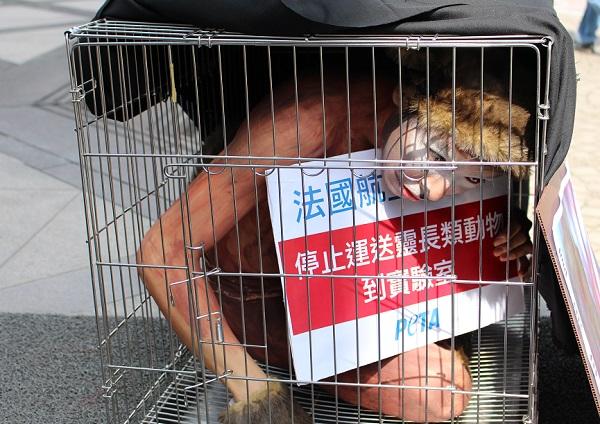 在抗議行動開始前,籠子被蓋上黑布,更符合猴子在密閉、黑暗的飛機貨艙中的感覺。 李娉婷/攝