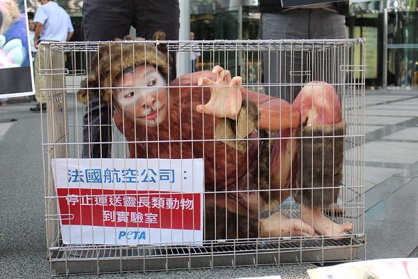 羅丹表示籠內空間狹窄,幾乎無法移動四肢,實驗猴在被運送的途中還要經歷黑暗、空氣不流通、沒有水與食物等更多痛苦。 李娉婷/攝