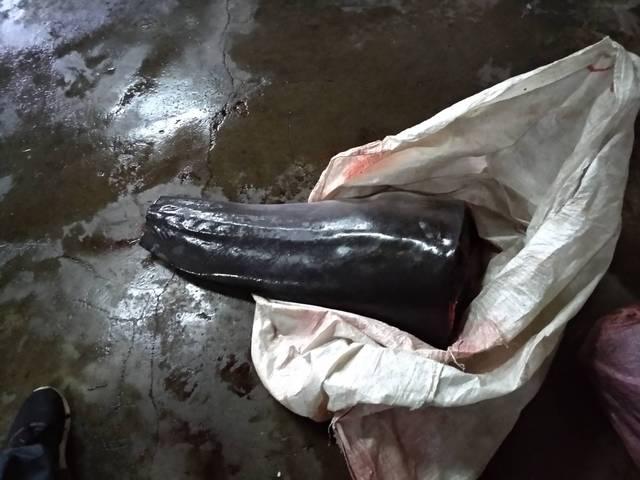 海巡署在宜蘭蘇澳內埤民宅裡的冷凍庫搜出大批鯨豚肉,重達1372公斤。 海巡隊/提供