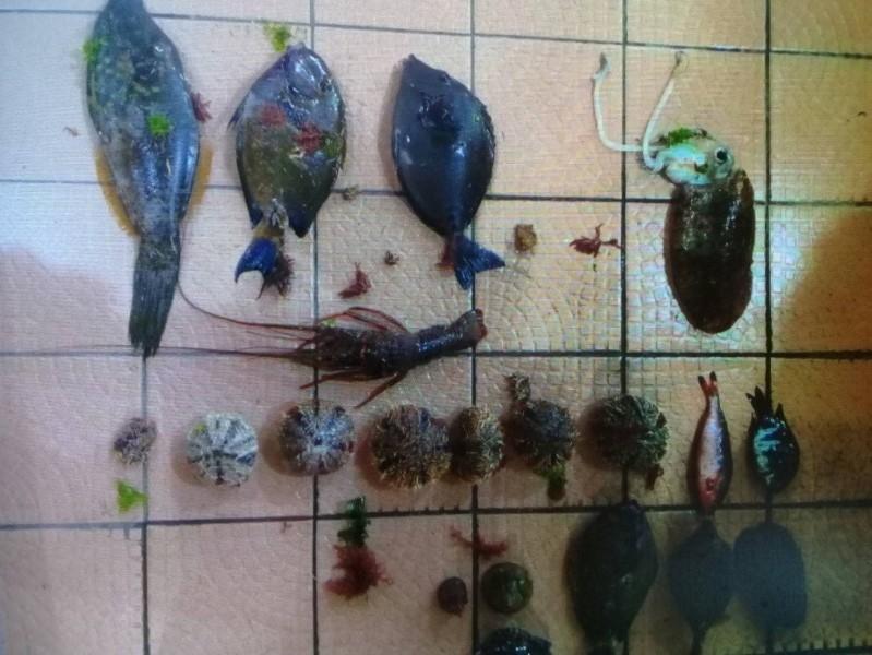 海巡署上週五查獲兩起違法捕撈卯澳灣保育區內的水產。 海巡署第二岸巡隊/提供