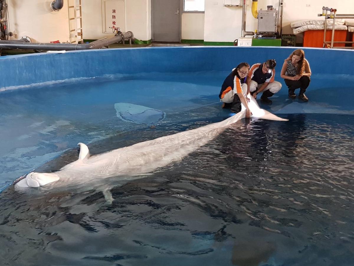 美國神秘水族館獸醫師Dr. Allison(右一)來到屏東海生館進行交流。 海生館/提供