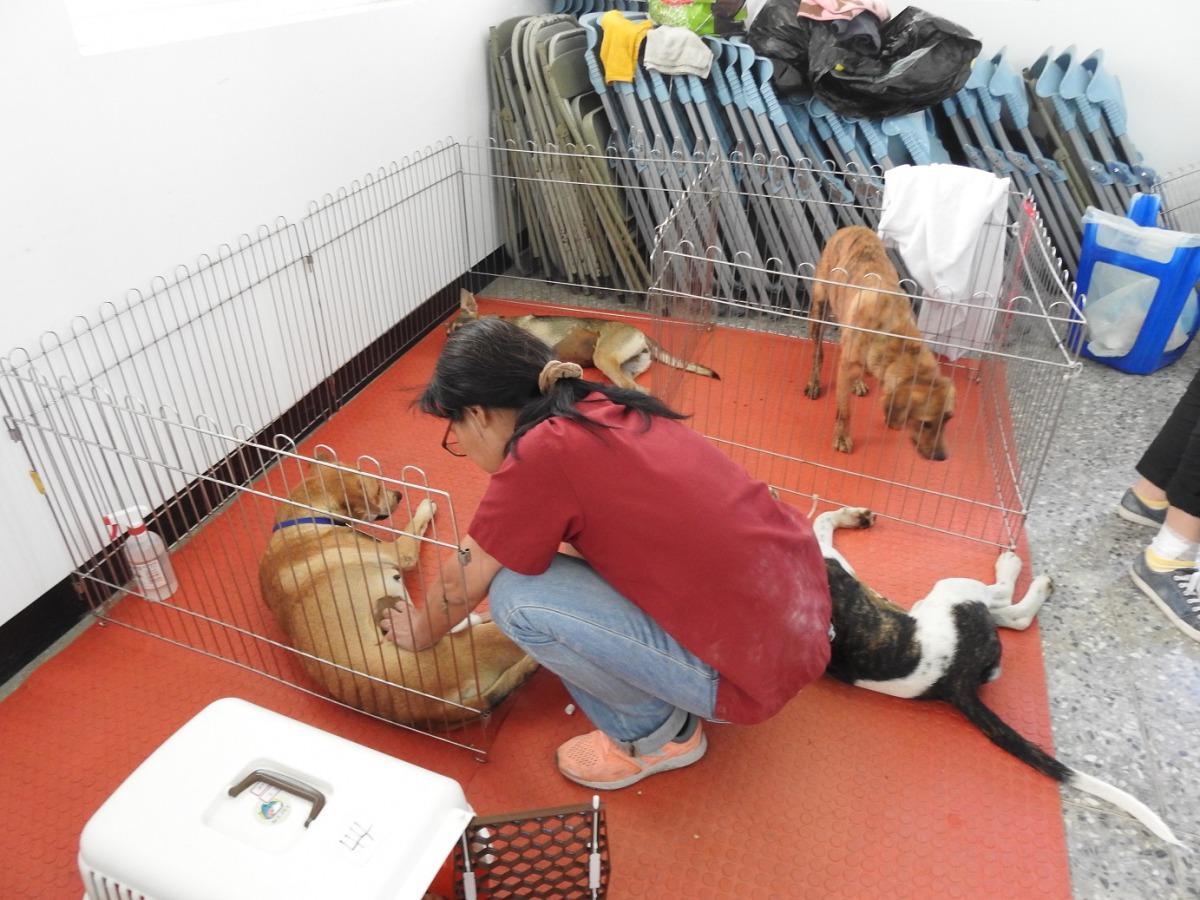 台灣之心下鄉絕育團隊,11月至台東縣展開犬貓絕育行動。 台東縣政府/提供