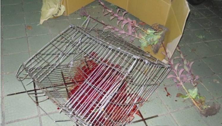 山豬的籠子一同從高處落下引起警方懷疑。 台中市警察局/提供