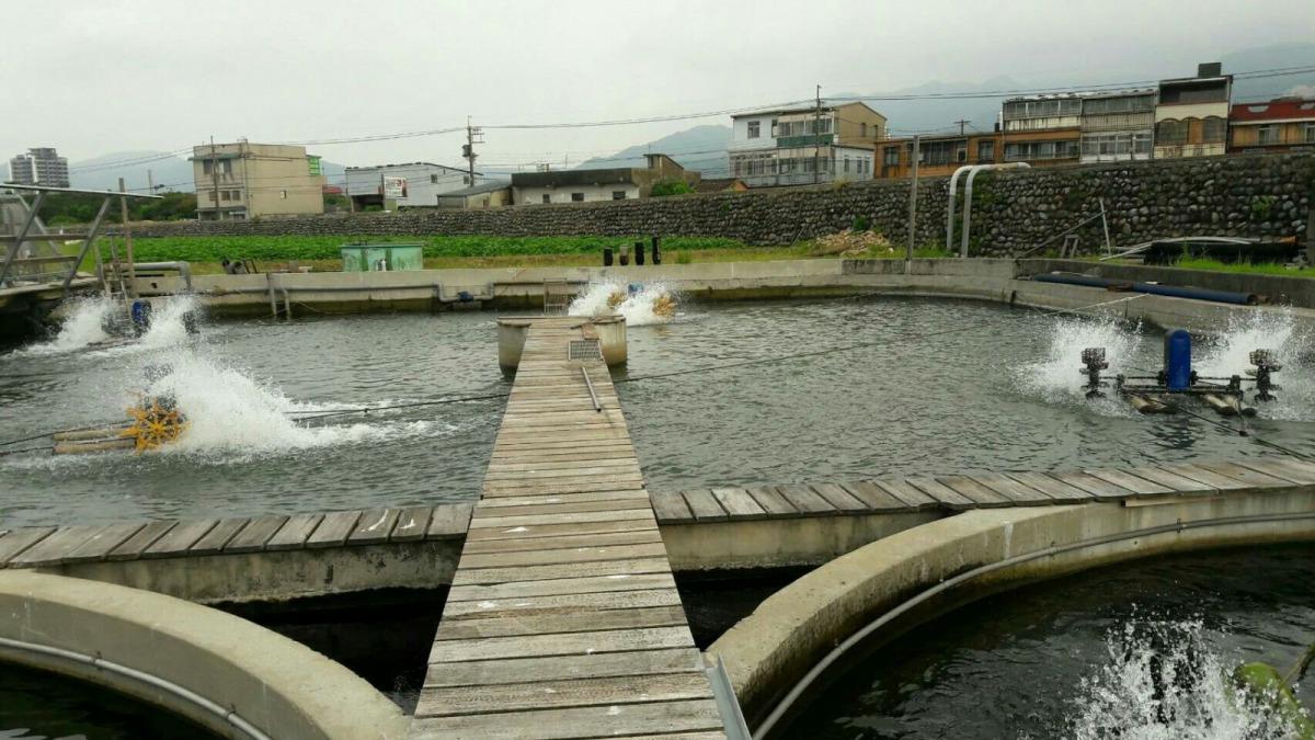養殖池加強水車打水可以有效提升溶氧量,避免藻類過度生長。 新北市動保處/提供