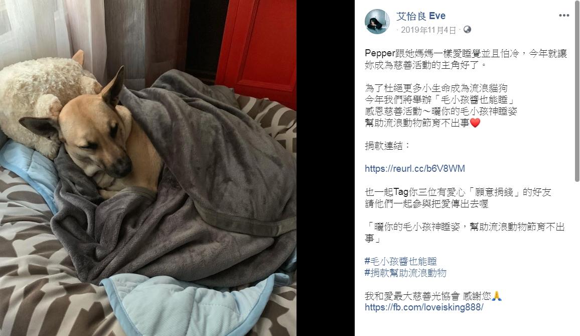 歌手艾怡良po出愛犬「Pepper」的照片,分享毛起來愛活動。 翻攝/艾怡良粉絲專頁