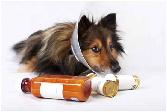 台灣目前獸醫師使用人藥治療毛小孩仍不合法。 台灣動物新聞網資料照片 取自/pixabay