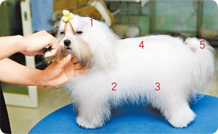 社团法人中华民国保护动物协会